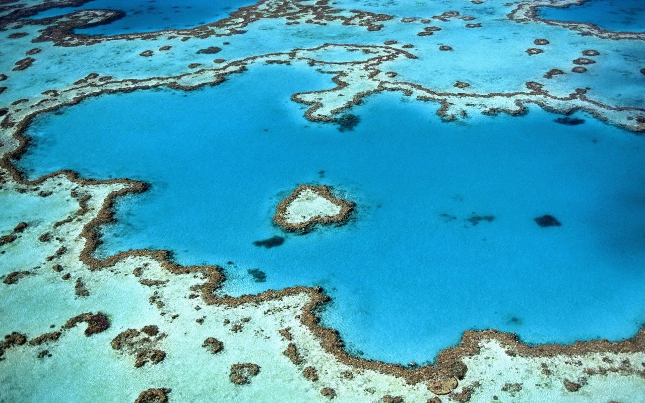 Using probiotic bacteria to protect against coral bleaching