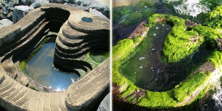 An Israeli Startup's Concrete 'Bio-Habitats' Bring Life Back to Urban Coastal Waters