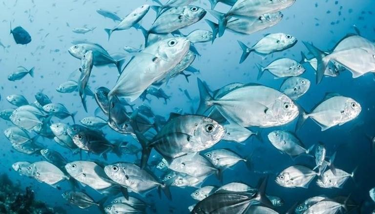 Blue food revolution can help solve climate change, malnutrition & economic crisis: Study