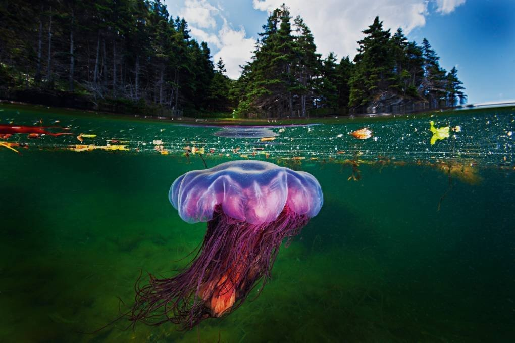 A Photographer Marries the Worlds Above and Below the Water in a Single Frame   KQED