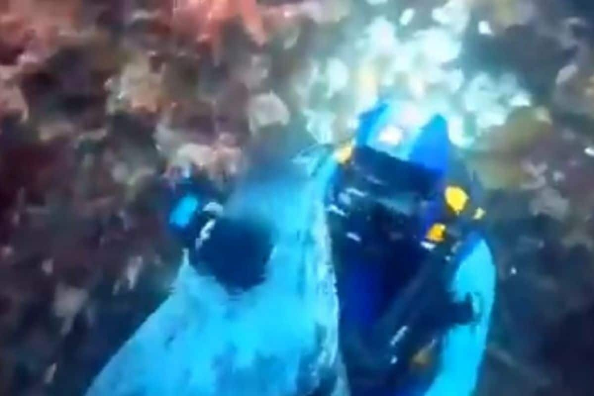 Watch: This Seal Hugging a Scuba Diver in Viral Video Will Melt Your Heart