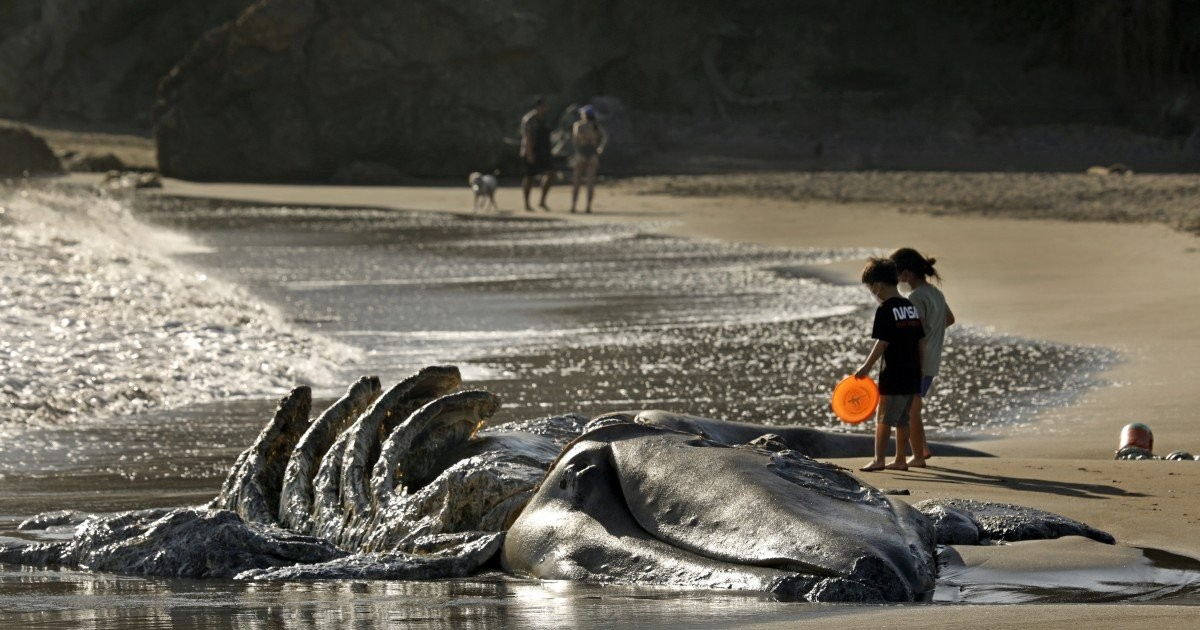 Three more whales wash up dead near San Francisco — eight total in five weeks