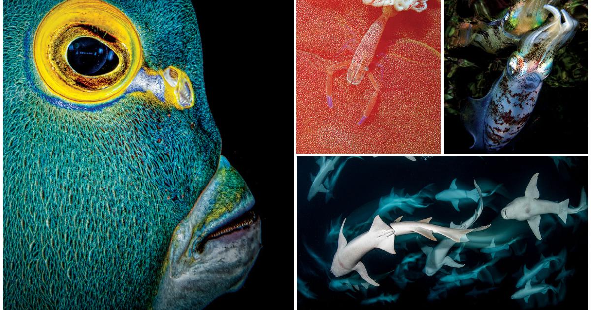 Scuba Diving's 2021 Underwater Photo Contest Winners