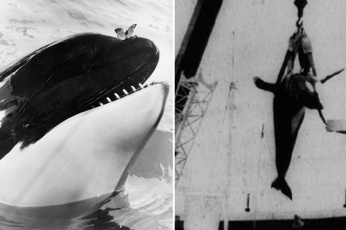 Killer whale named Hugo 'committed SUICIDE' by ramming head against tank