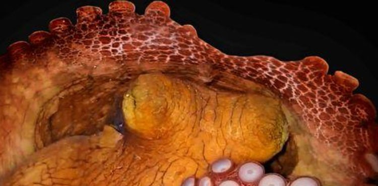 Octopuses, like humans, sleep in two stages, may dream - ARY NEWS